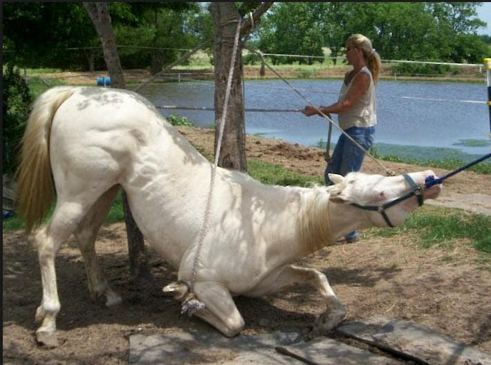 Female Saudi Horse Trainer Sees Hope for Women - Dubai Post |Horse Training