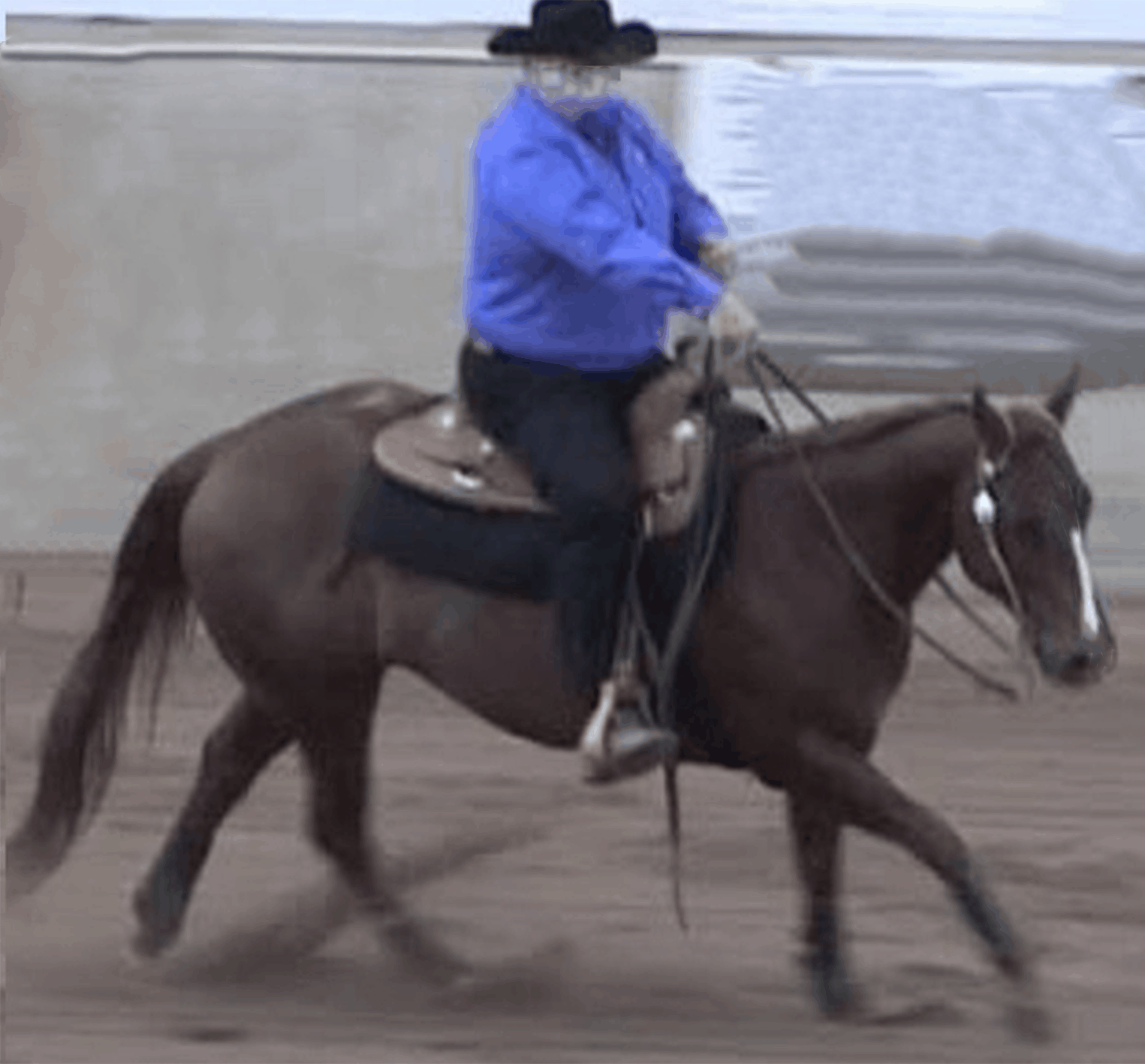 Horse Welfare Archives Reining Trainers