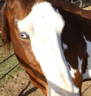 horses head shot