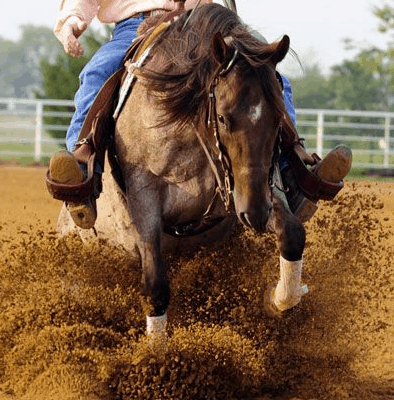 reining horse sliding on arena