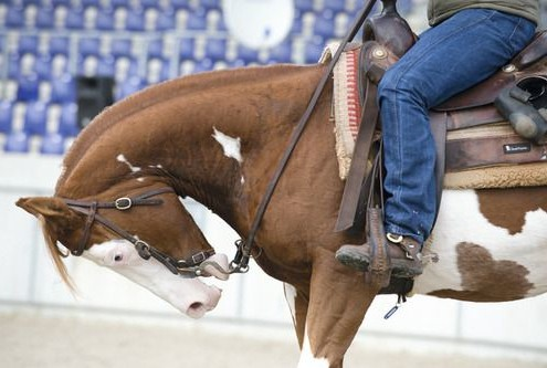 Horse Reins being jerked on against Horse Abuse Guidelines
